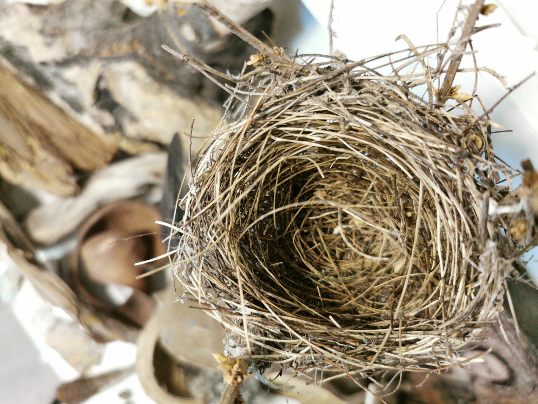 Nest und andere Naturmaterialien zur Inspiration